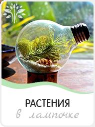 растения в лампочках